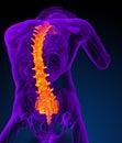 D odpłacają się medyczną ilustrację ludzki kręgosłup Obrazy Royalty Free