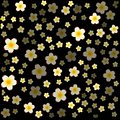 stock image of  White jasmine flowers with yellow centre on black background.