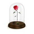 D red rose in a glass dome on white Stock Photo