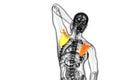 D rendent l illustration médicale de l os d omoplate Photo stock