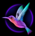 D render of colibri bird hummingbird striped silhouette Stock Photos