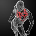 D render illustration of the rib cage top view Royalty Free Stock Photo