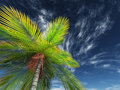 3D render of looking up a palm tree towards the sky Royalty Free Stock Photo