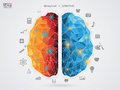 Vector Illustration Of A Brain...