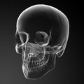 D render skull on black background side view Stock Photo