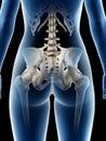 a females hip bone Royalty Free Stock Photo