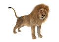 3D Rendering Male Lion on White Royalty Free Stock Photo