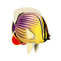 3D Rendering Redfin Butterflyfish on White
