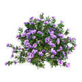 3D Rendering Rhododendron On W...