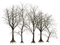 D trees isolated designs of bare on white background Stock Image