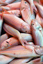 Dace fish fresh in red raw selling market with status Stock Photo