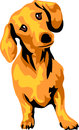 Dachshund color illustration of smooth haired Royalty Free Stock Images