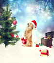 Dachshund dog decorating christmas tree with treasure box on the snow Stock Photo