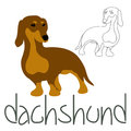 Dachshund dog set vector illustration style