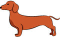 Dachshund illustration of a funny dog isolated Stock Photography