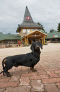 Dachshund in Santa Claus Village near Rovaniemi, Finland Royalty Free Stock Photo