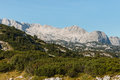 Dachstein massif in Austrian Alps with dwarf mountain pine shrubs Royalty Free Stock Photo