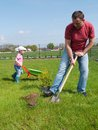 Dad and daughter gardening his little planting together thuja tree in the garden Stock Photo