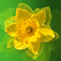Daffodil flower on a green background easter art flower abstract flower photo flower photo picture of flowers Stock Photography