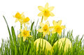 Daffodil flowers and easter eggs yellow Royalty Free Stock Images