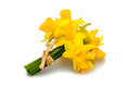 Daffodil flowers isolated on white background macro shot Stock Images
