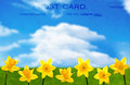 Daffodil postcard with blue spring sky Royalty Free Stock Images
