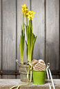 Daffodils in basket on wooden background Royalty Free Stock Photo