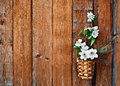 Daffodils and blossoming apple tree branch in a basket Royalty Free Stock Photo