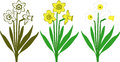 Daffodils bouquet of white and yellow Royalty Free Stock Photos