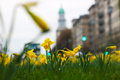 Daffodils in the city Royalty Free Stock Photo