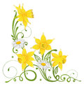 Daffodils daisy easter colorful spring and Stock Photography