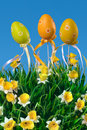 Daffodils and Easter eggs Royalty Free Stock Photography