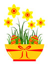 Daffodils in pot and easter eggs isolated on white background Stock Image