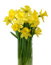 Daffodils in a vase - isolated Stock Photo