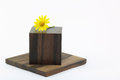 Dahlberg daisy on wood block pictured in a white background Stock Photos
