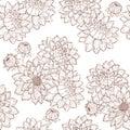 Dahlia flower and buds Stock Image