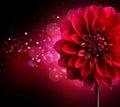 Jiřina kvetina dizajn
