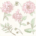 Dahlia set flower vintage hand drawn vector collection Stock Photo