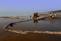 Dailylife of fishermen a group pulling fishing net on the sea side orissa Stock Photography