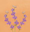 Dainty purple larkspurs flowering against light orange background Royalty Free Stock Images