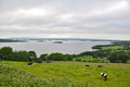 Dairy cows and lake in Ireland Royalty Free Stock Photo