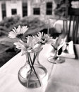 Daisies in glass vase on table Royalty Free Stock Photo