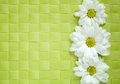 Daisies on green background line checkered Stock Photos