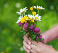 Daisies in hands of a child sunny spring background close up harmony concept Stock Photos