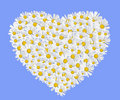 Daisies heart Royalty Free Stock Photography
