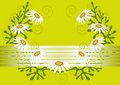 Daisies on light green background.Background.Postc