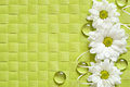 Daisies line on green background checkered Royalty Free Stock Photography
