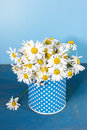Daisies many on a blue background Stock Photos
