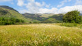 Daisies mountains blue sky and clouds scenic langdale valley lake district uk daisy field with cumbria near old dungeon ghyll Stock Photos