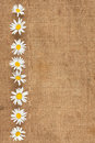 Daisies are on sackcloth can be used as background Royalty Free Stock Photos